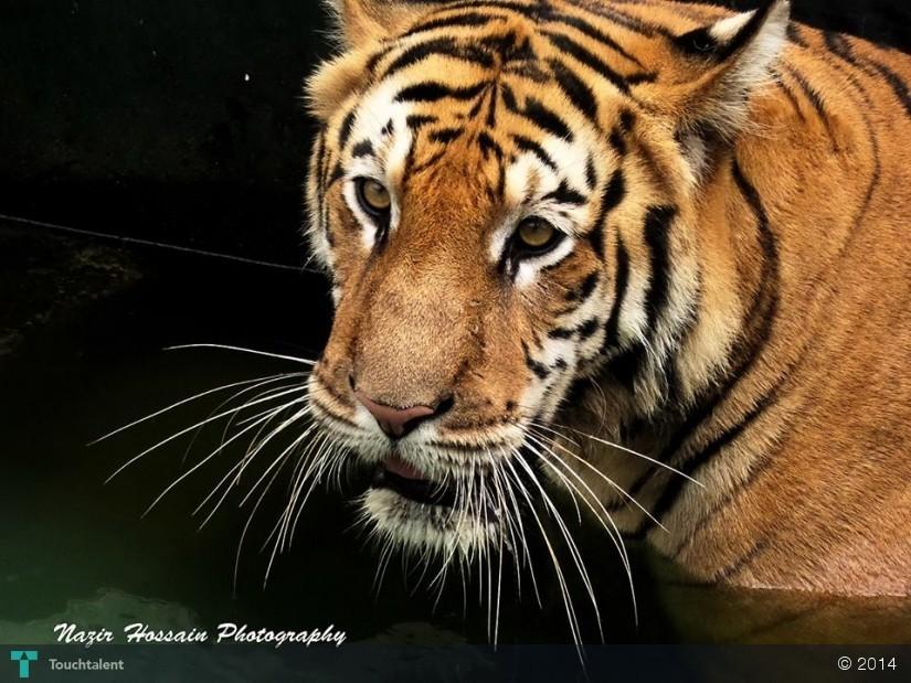 Hossain Photography Nazir Hossain Photography in