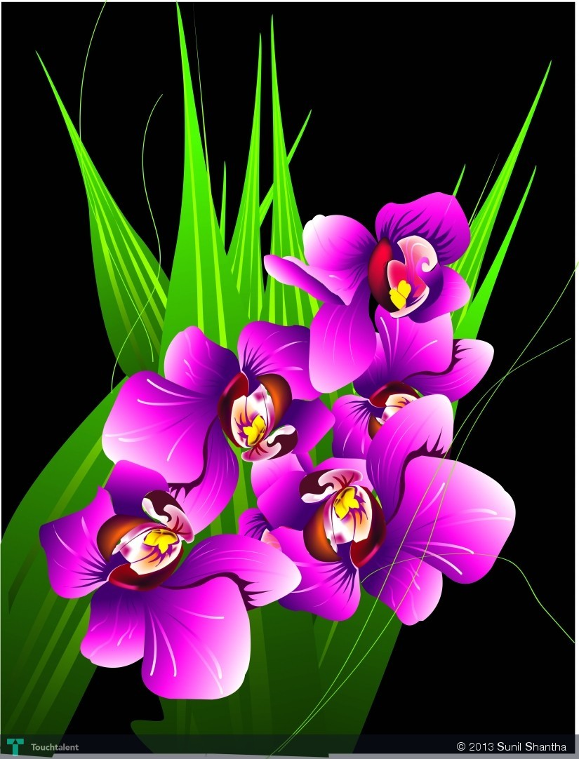 an orchid flowers (adobe illustrator) | touchtalent - for everything