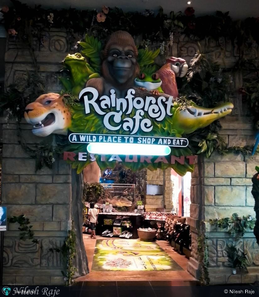 rainforest cafe a wild place to shop and eat Rainforest cafe - a wild place to shop and eat rainforest cafe - a wild place to shop and eat home / cafe / rainforestcafecom popularity  50 out of 5.
