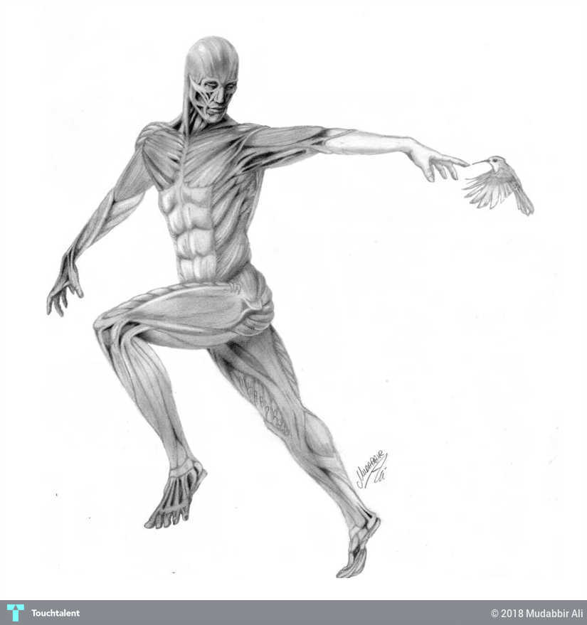 Human Anatomy Sketching Mudabbir Ali Touchtalent