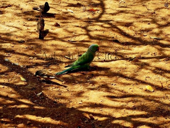 A Parrot - Photography by Aakash Jain at touchtalent 4160
