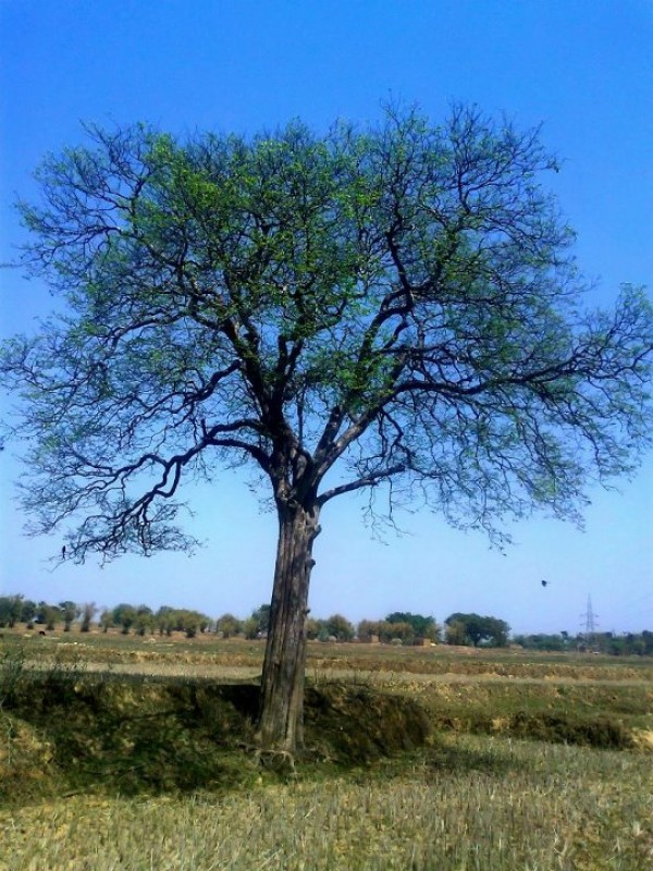 Alone Tree - Photography by Arun Mishra at touchtalent 1843