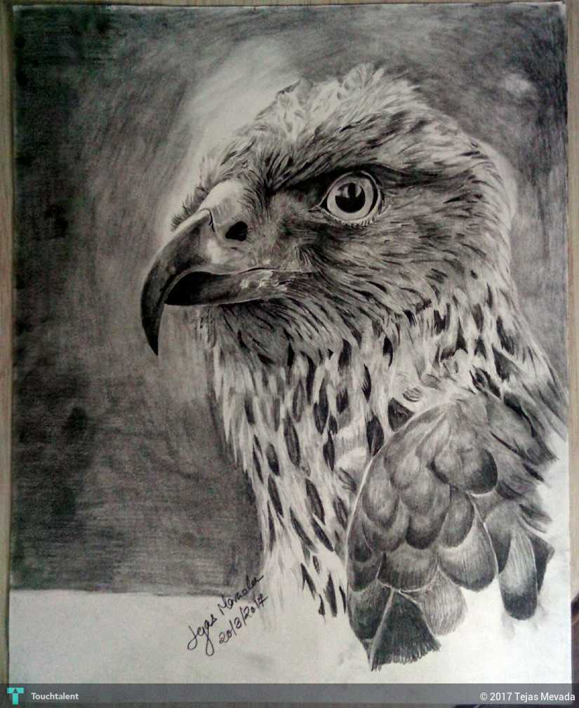 Eagle pencil sketch in sketching by tejas mevada