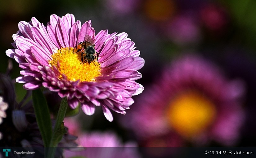 Honey Bee On Flower in Photography